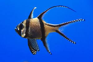 AquariumFish