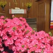 Azaleas Planted in Memory of Ed Blackman  (5/12/14)