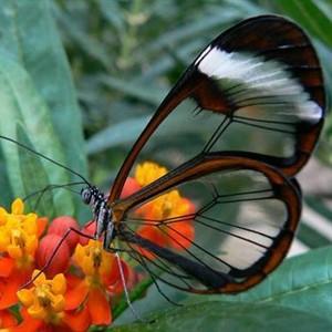 Butterfly _Facebook_300x300