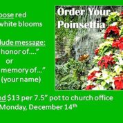 Poinsettias Point to Families (Order by 12/14/20)
